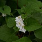 Acquista piante per terreno umido
